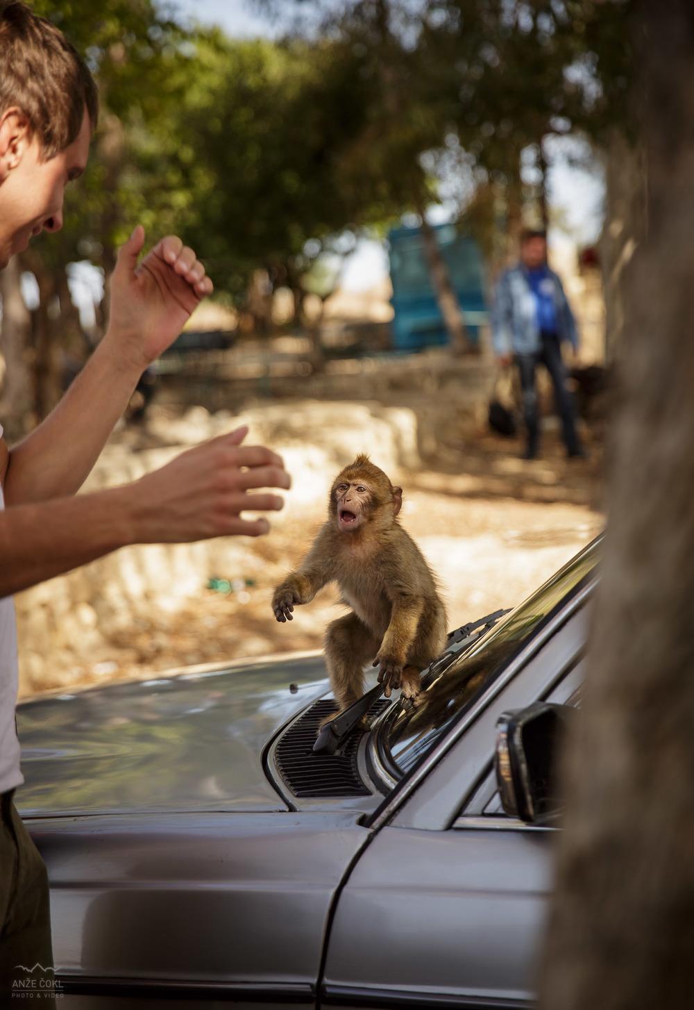 Nadležna opica je bila presenetljivo bistra.