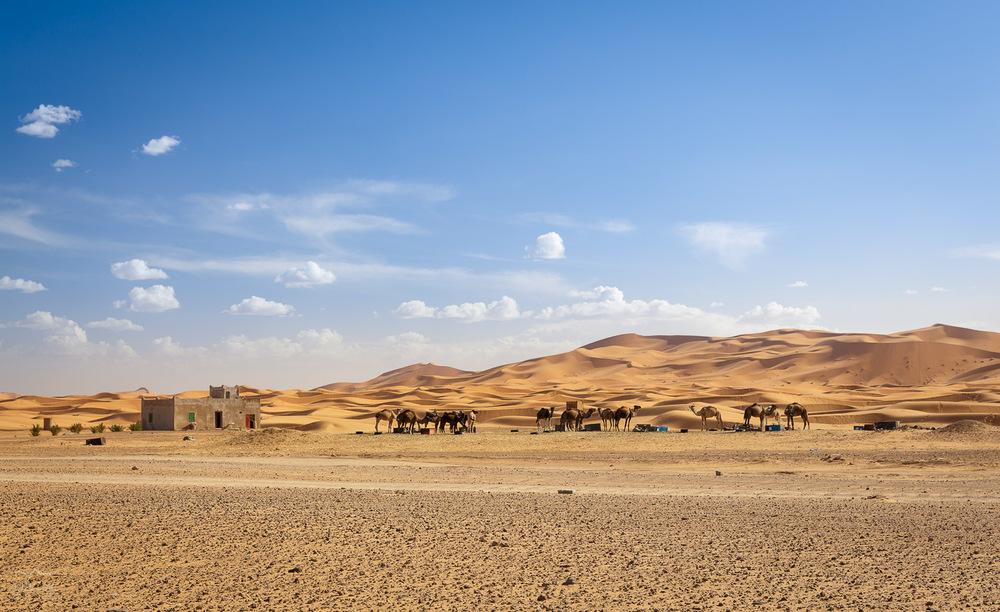 Nevajenim puščavskih prizorov se nam je tukaj od vsega novega že vrtelo v glavi! Malo tudi od žgoče vročine.