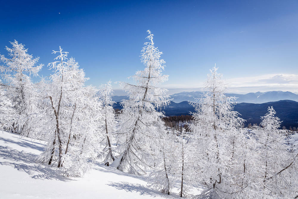 Veter je bil drevesa okoval v snežno in ledeno tančico.