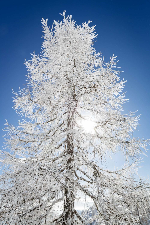 Veter je z raznašanjem snega drevo okopal v tanek ledeni oklep.