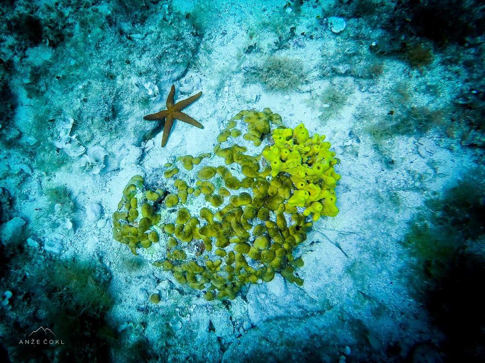 Nekaj podvodnega življa.