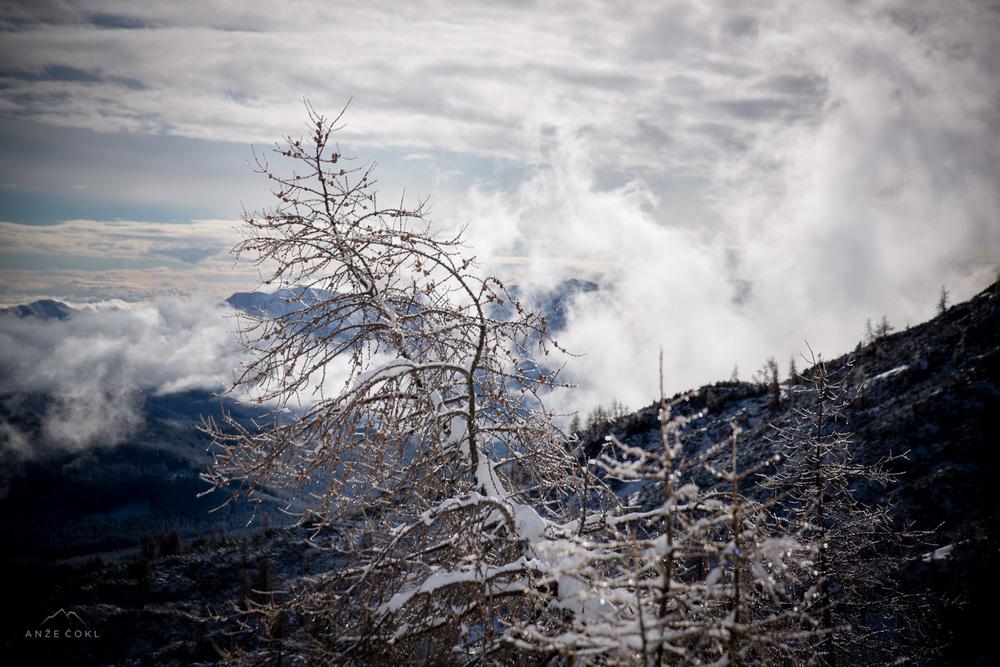 V led okovano drevo
