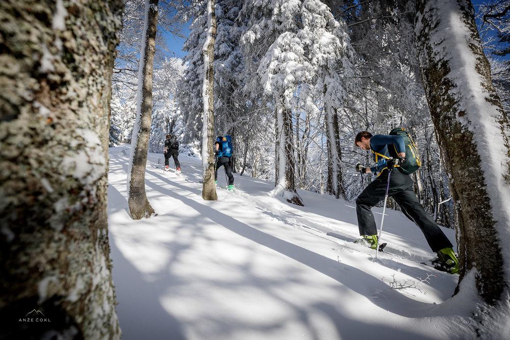 Vzpenjanje s smučmi skozi gozd prvi dan po sneženju.
