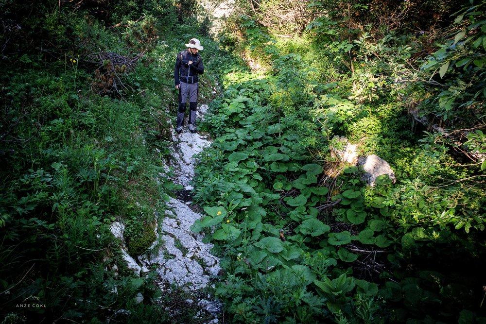 Džungla brez razgledov. Glavni razlog, zakaj se področja okrog Komne (v letni sezoni) izogibam kot hudič križa.