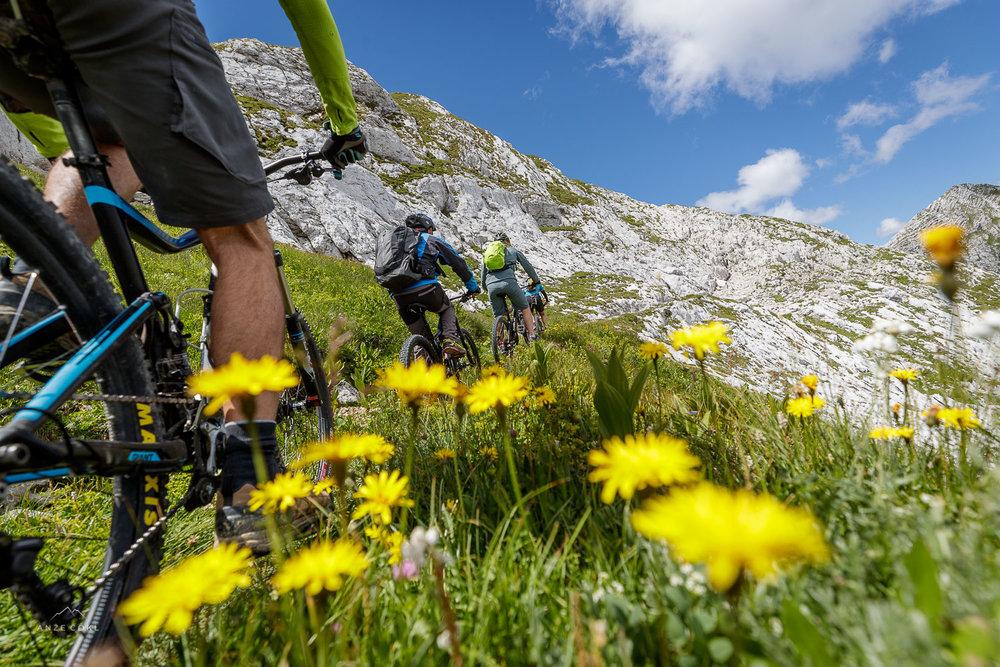 Flower Power ali gorsko cvetje ob poti.