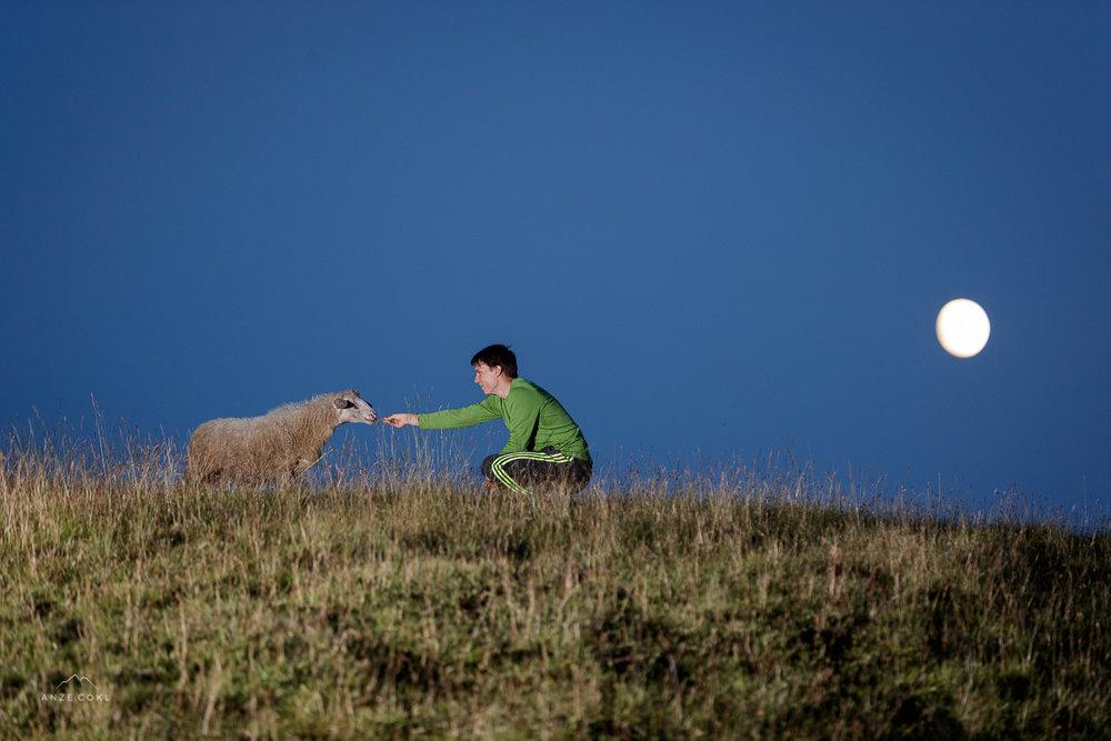 Tudi ovce so nas prišle pogledat v upanju, da jim imamo ob polni luni za ponudit kaj drugega kot travo.