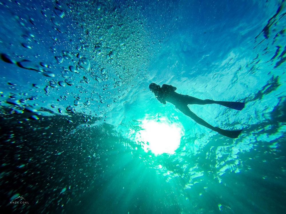 Morsko življe