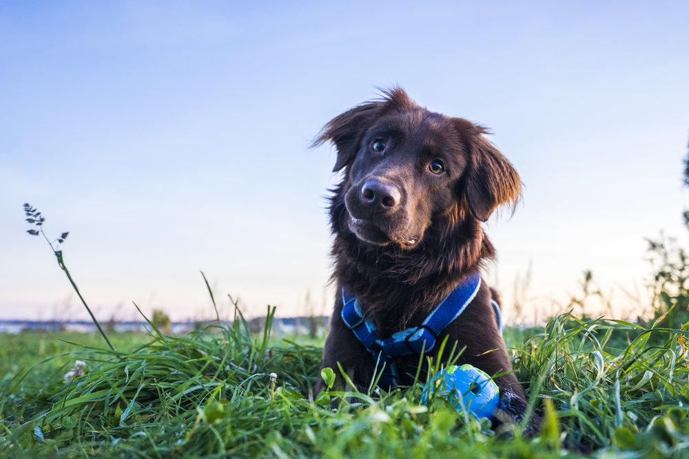 Bodie-Planet Dog-8.jpg