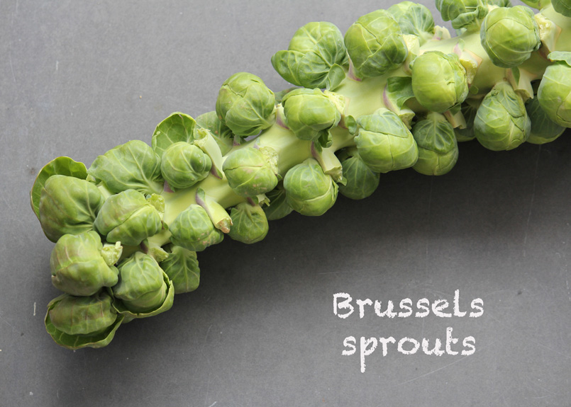 SFC_brusselssprouts_stalk_labeled.jpg