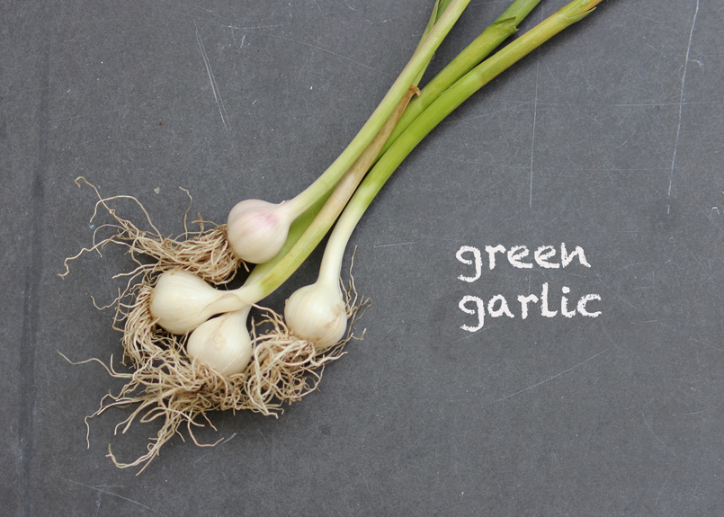 SFC_garlic_green_labeled.jpg