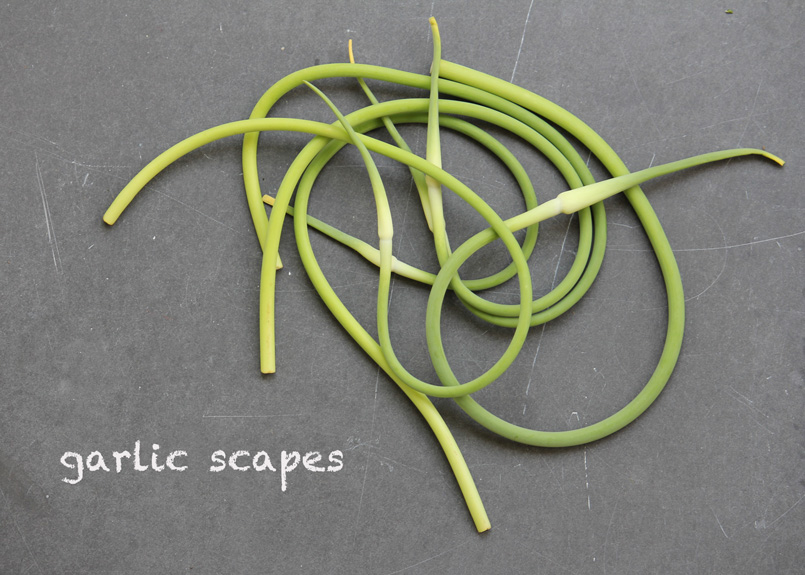 SFC_garlic_scapes_labeled.jpg