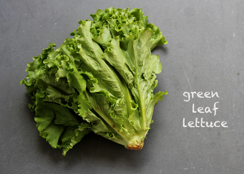 SFC_lettuce_greenleaf_labeled.jpg