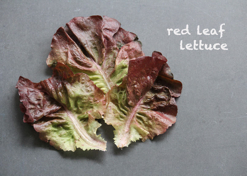 SFC_lettuce_redleaf_labeled.jpg