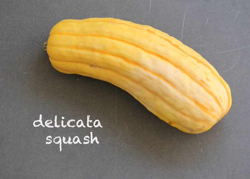 SFC_squash_delicata_labeled.jpg