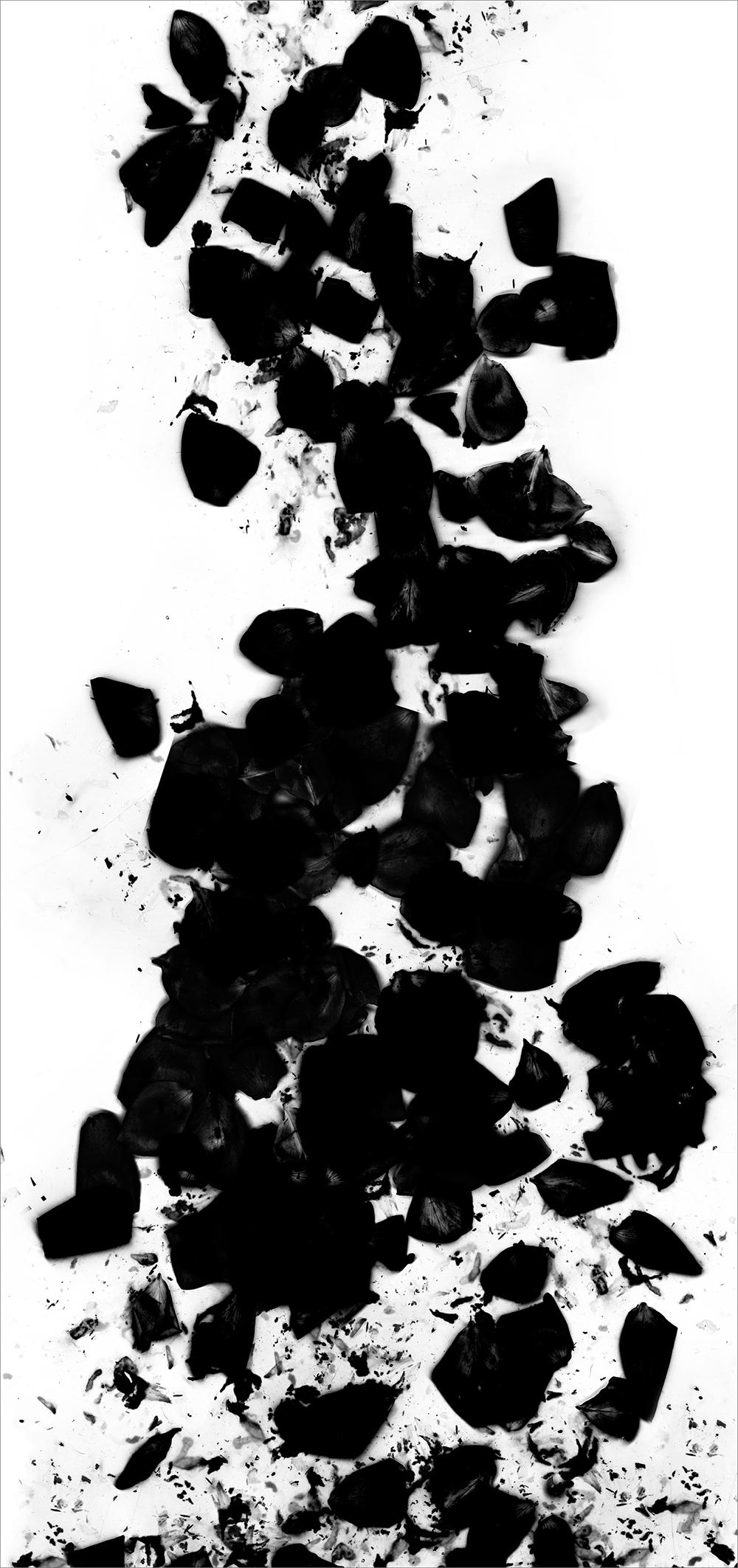 "#  5   inkjet print  , 90 x 44""  2009"
