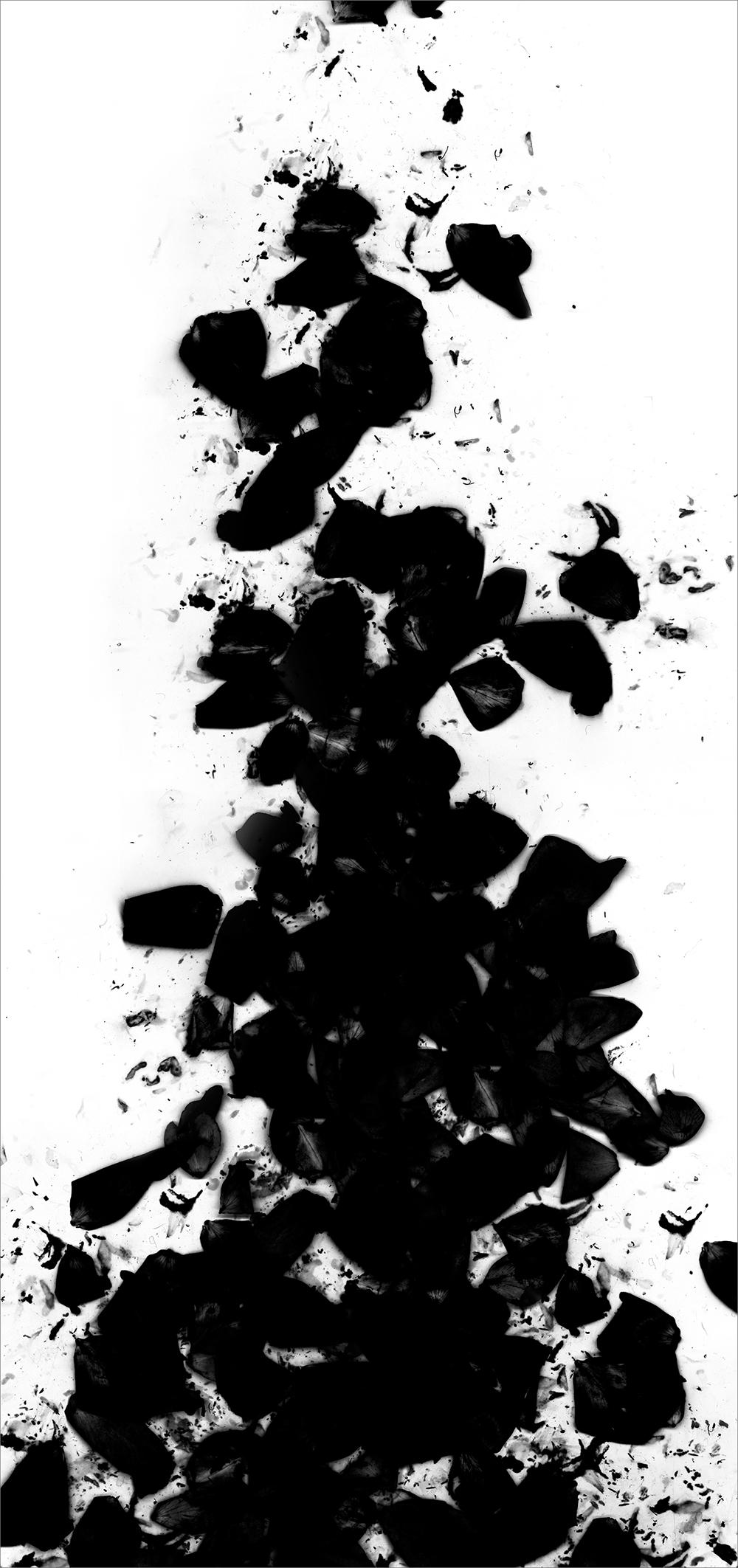 "#  6   inkjet print  , 90 x 44""  2009"