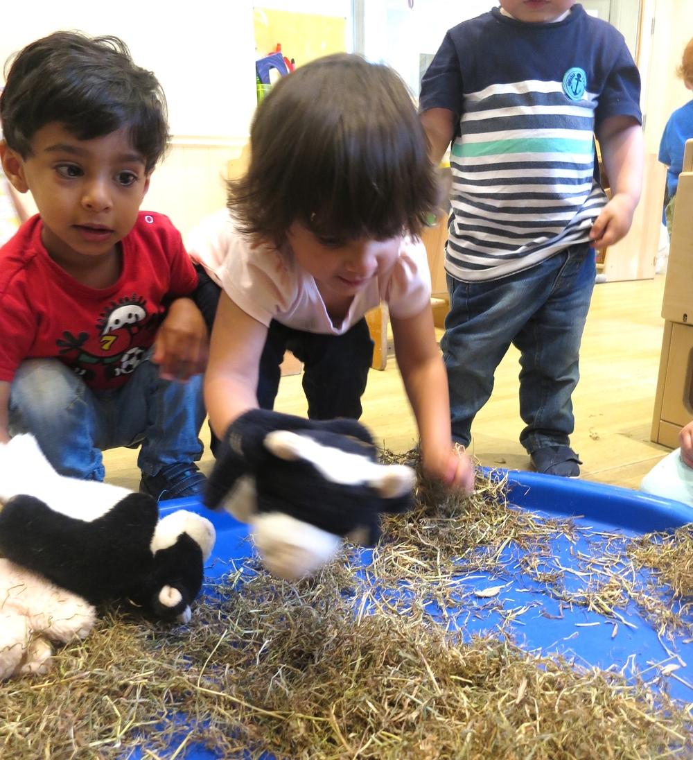 FARM ANIMALS DOLPHIN 2016 129.JPG