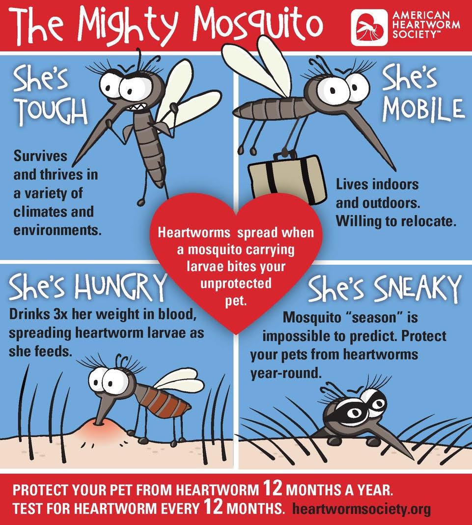 mosquito heartworm pet pests