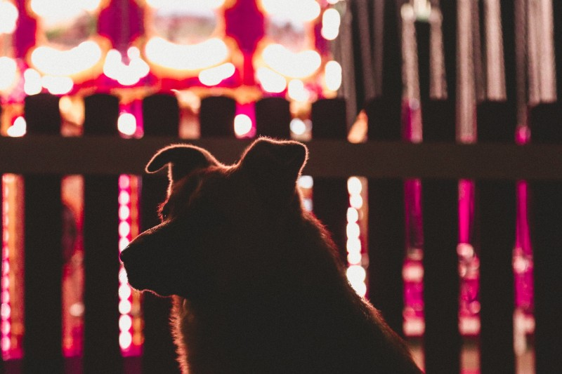 fireworks dogs anxiety