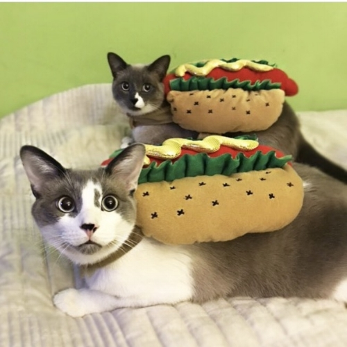 Ray and Chacha as Chicago Hot Dogs!