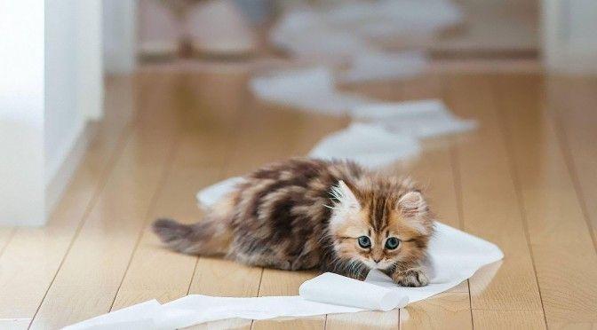 kitten playing.jpg