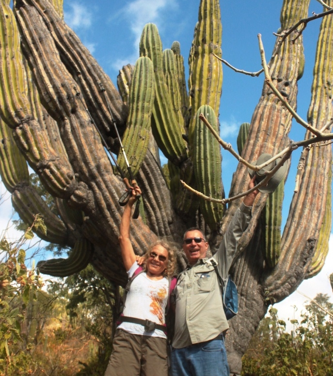 One of the oldest Cardon cacti on Rancho Cacachilas