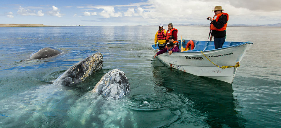 ballenas-avistamiento-baja-california-sur.jpg
