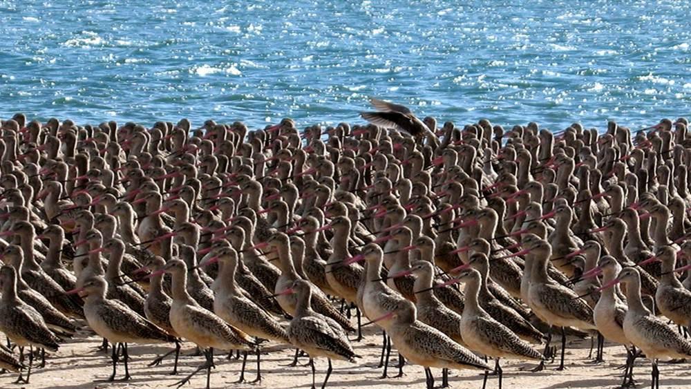 birds-laguna-san-ignacio-oyster-farm.jpg