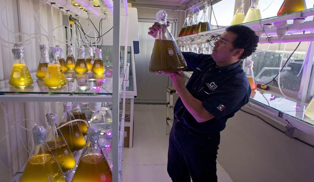 oyster-farm-laboratory-analysis-baja-california-sur-socio-christy-walton.jpg