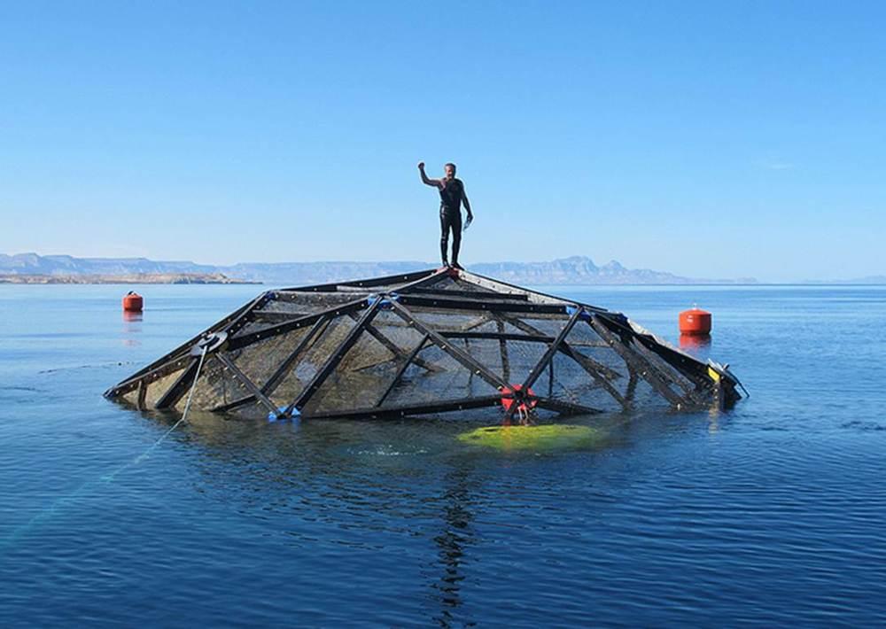 aquapod-tecnologia-aquacultura-baja-california-sur-empresa-christy-walton.jpg