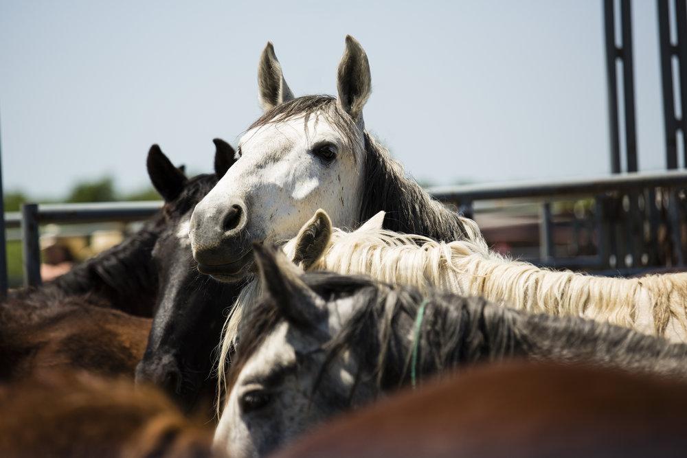 Mustangs-.jpg