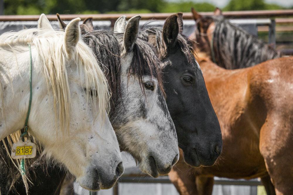 Mustangs-5618.jpg