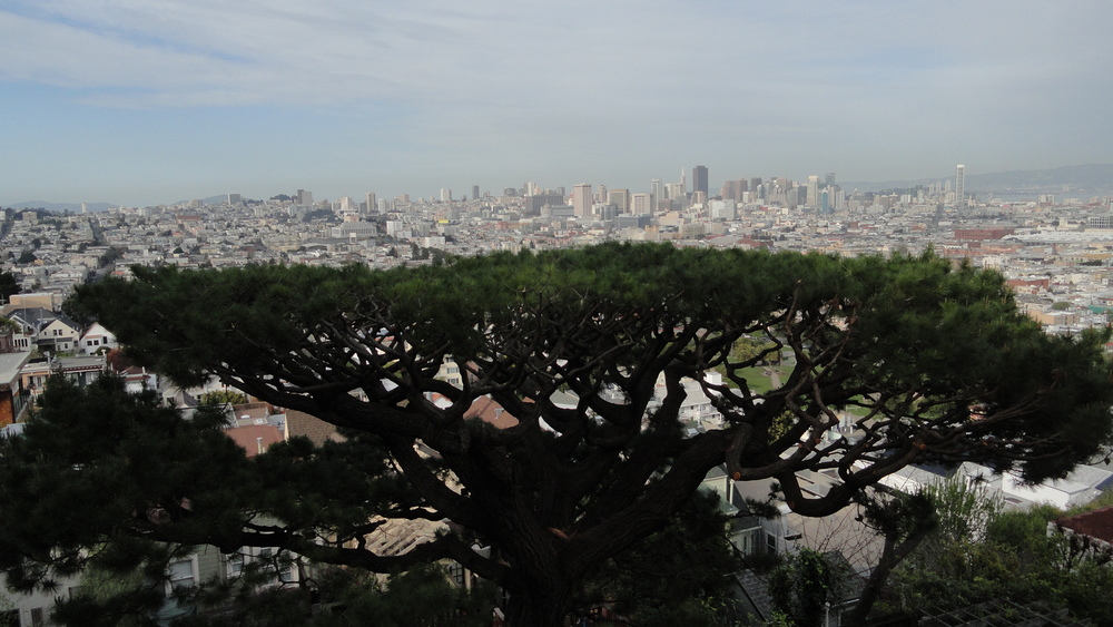San Francisco tree care