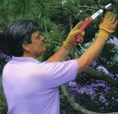 Bay Area Arborist Cooperative Arborist Ted Kipping