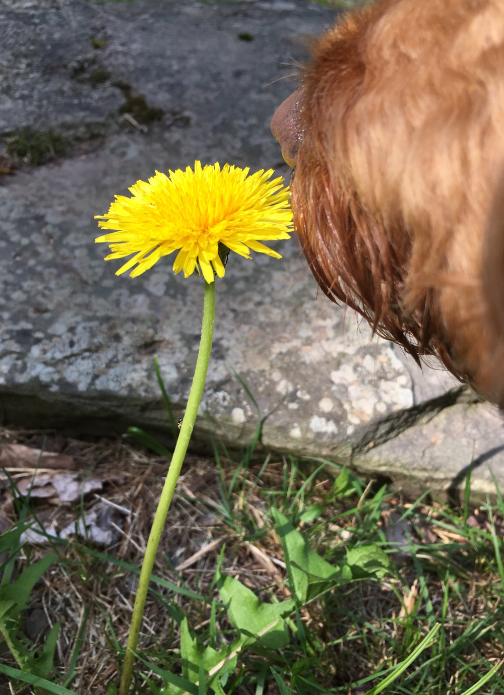 Stopping to smell the flowers - Or weeds, more precisely