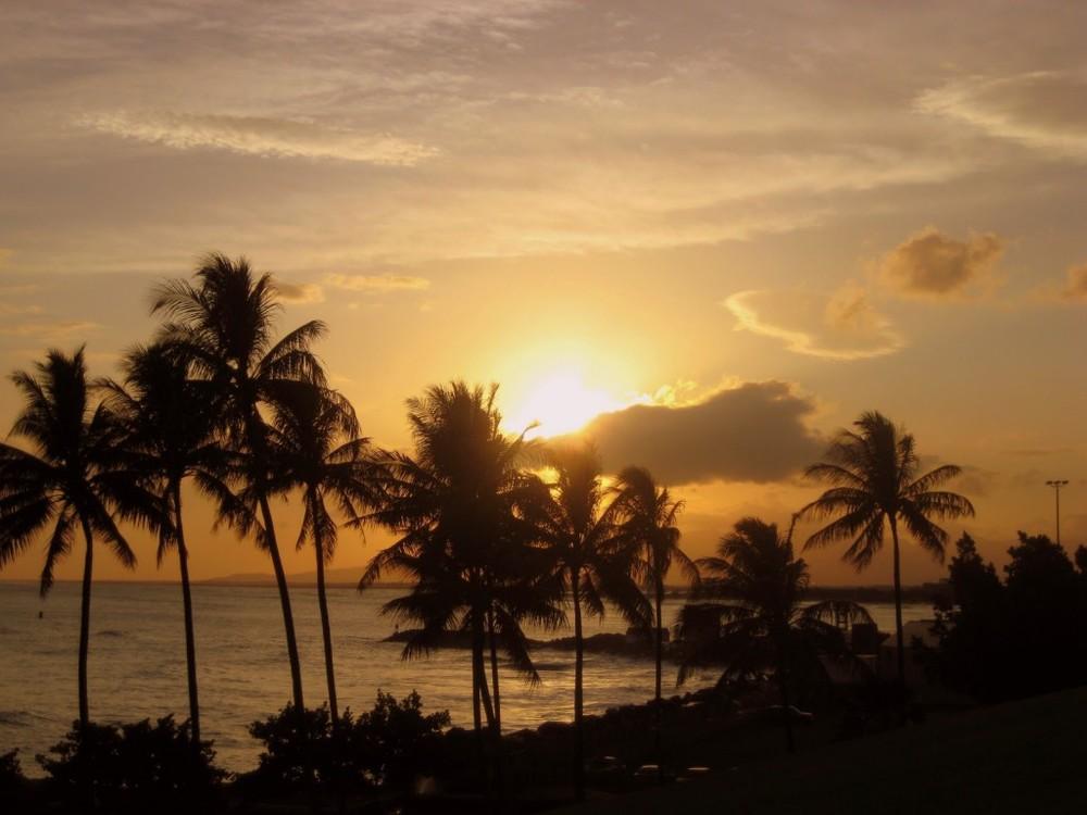 palm+trees