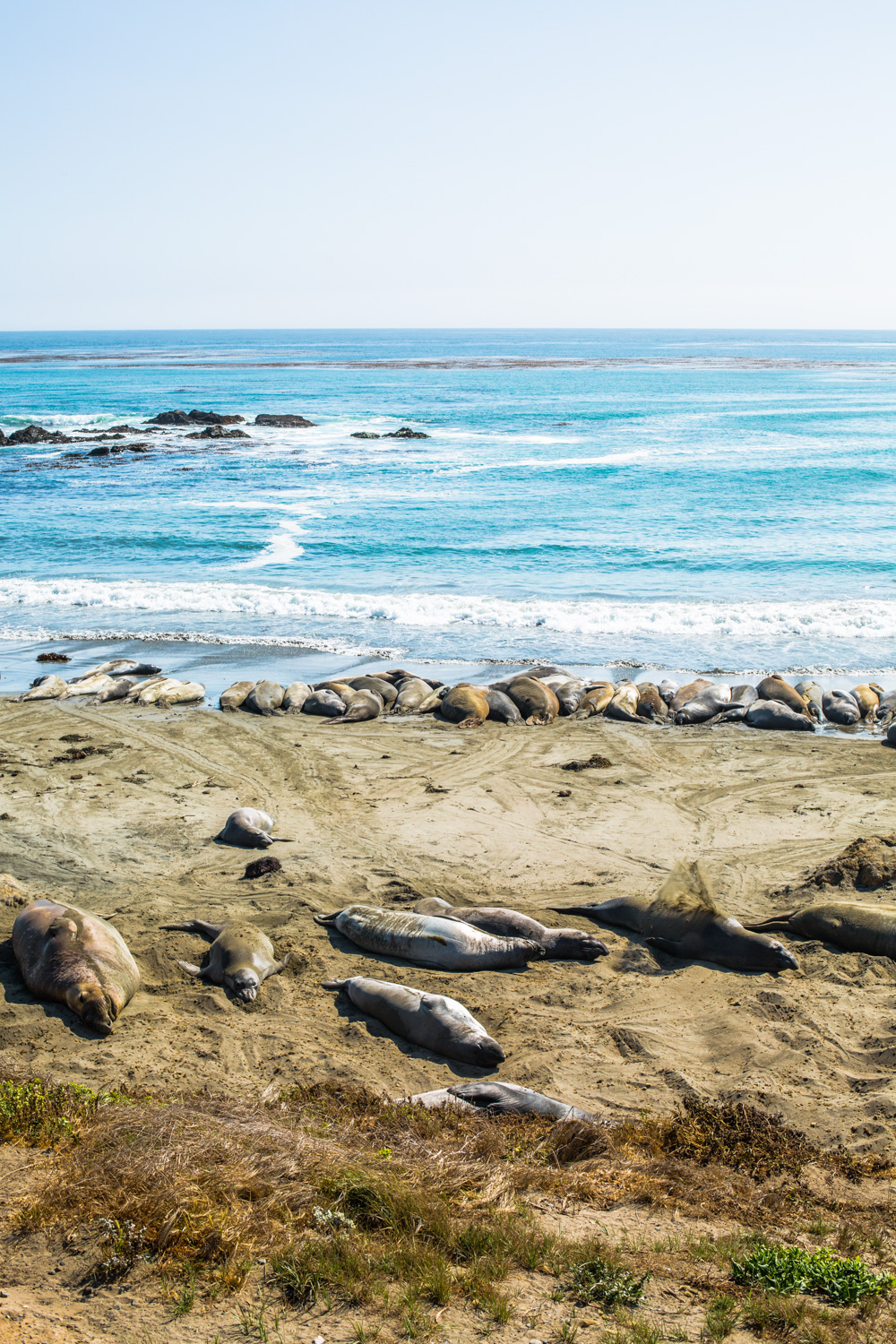 Elephant Seal Beach, California