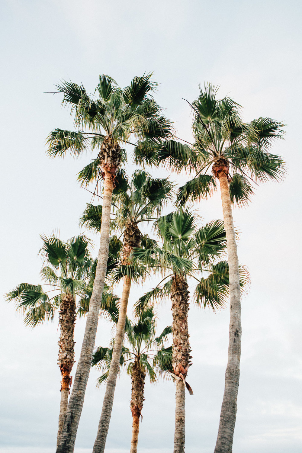Palm love at Laguna Beach, California