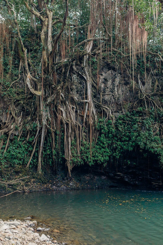 Hana, Maui, by Madeline Lu-5.jpg