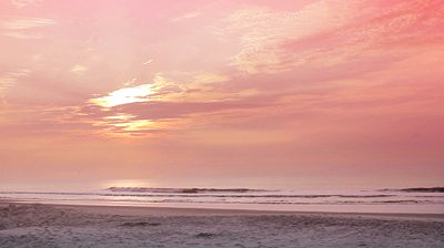 stock-footage-a-dog-running-on-the-beach-in-pink-morning-light.jpg