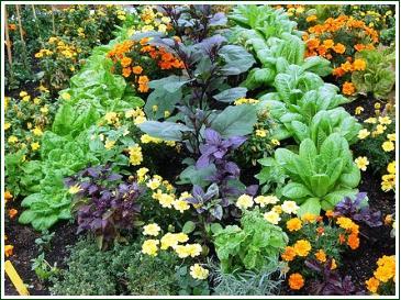 www.no-dig-vegetablegarden.com