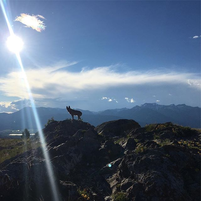 There are a lot of fun things to do in summer...but running ridges with my dingo friend is pretty high up there...! @littledingodog #extradingo