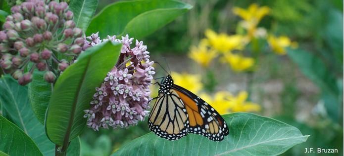 Make a Butterfly Garden