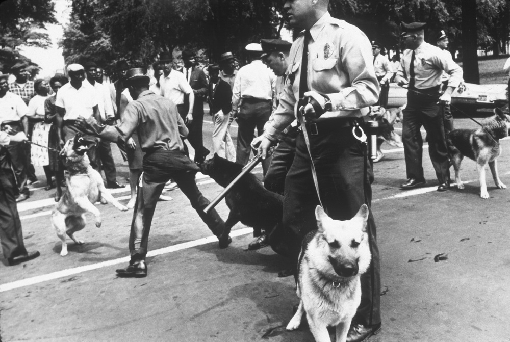Charles Moore, Police using dogs to attack civil rights demonstrators, Birmingham, Alabama (1963), Gelatin silver print, image 8 1/4 x 12 1/4 inches