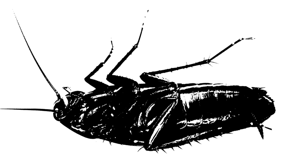 the transformation of gregor samsa in the metamorphosis by franz kafka Franz kafka upgrade to  before his transformation, his main concern is  providing for his family he resents  as gregor samsa awoke one morning from  uneasy dreams he found himself transformed in his bed into a gigantic insect  related.