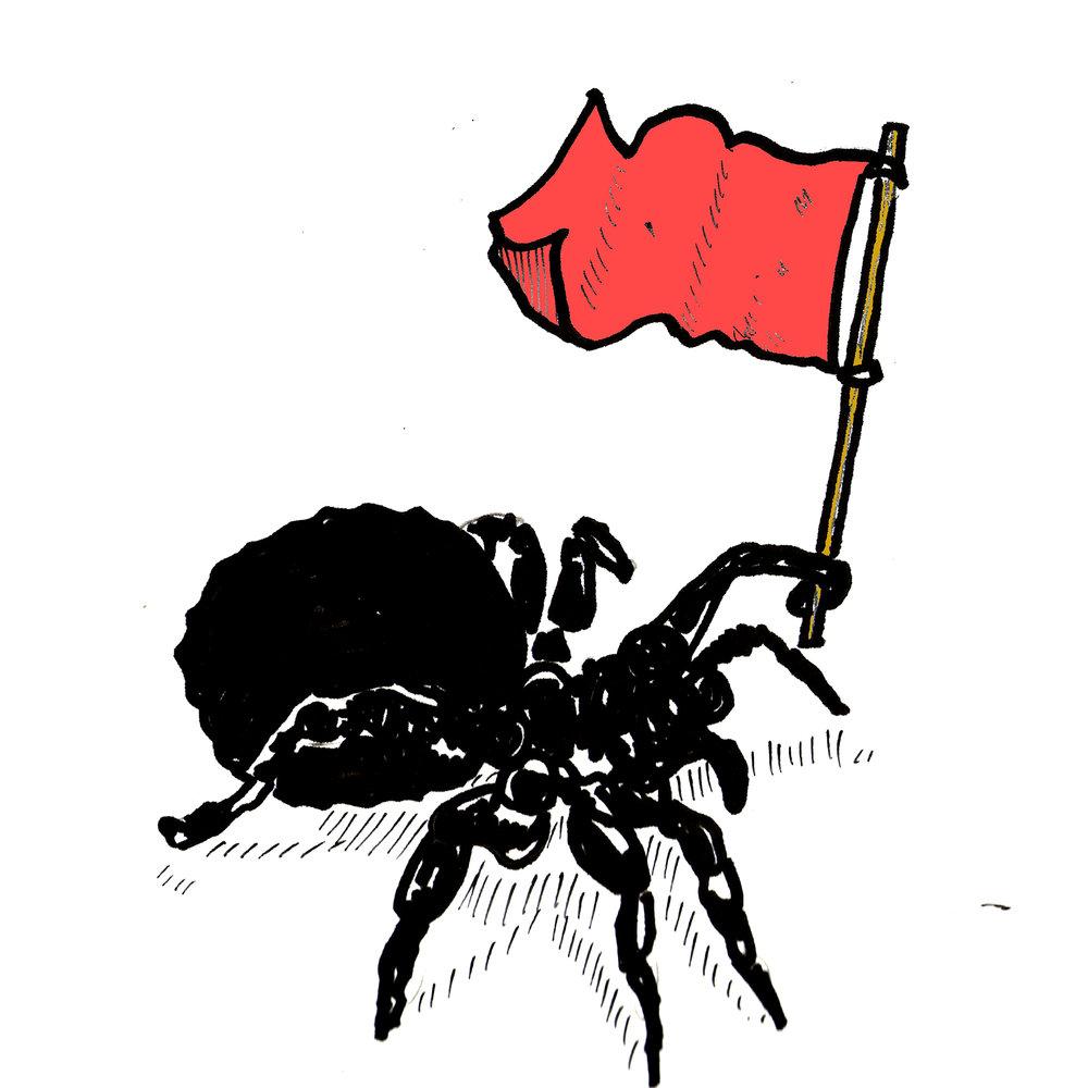 red-spider.jpg