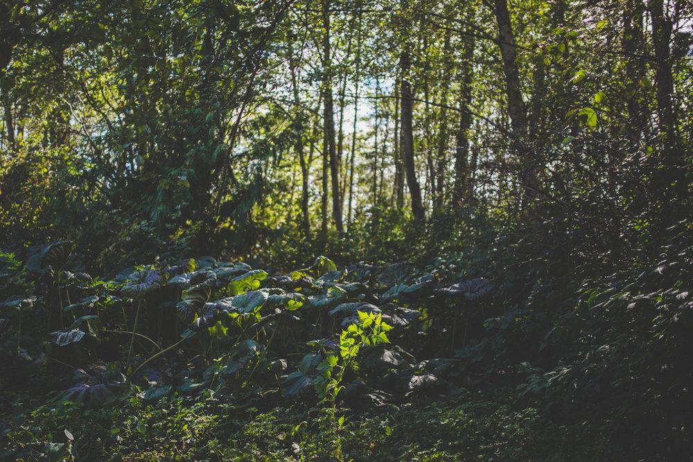 SquamishWeddingPhotography-51.jpg