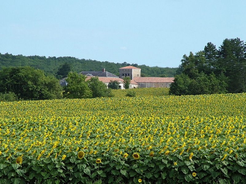 Les Stables and Sunflowers.jpg