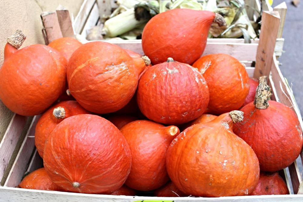 autumn-pumpkin-pile