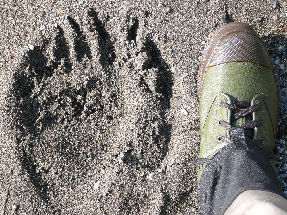 Bear print & boot